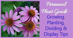 Growth Chart Growing Perennials How To Grow Perennial Plants The