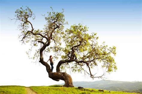 applying ecological principles ecoliteracyorg