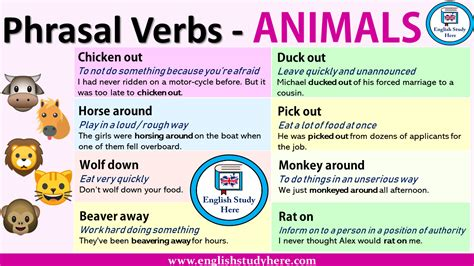 phrasal verbs  animals english study