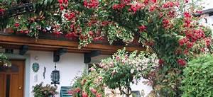 Winterharte Fuchsien Kaufen : fuchsie fuchsia ~ Eleganceandgraceweddings.com Haus und Dekorationen