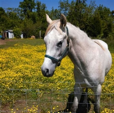 horse smartest most mojly lovely