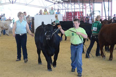 livestock   great jones county fair