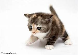 pictures: top 1... Cute Cats