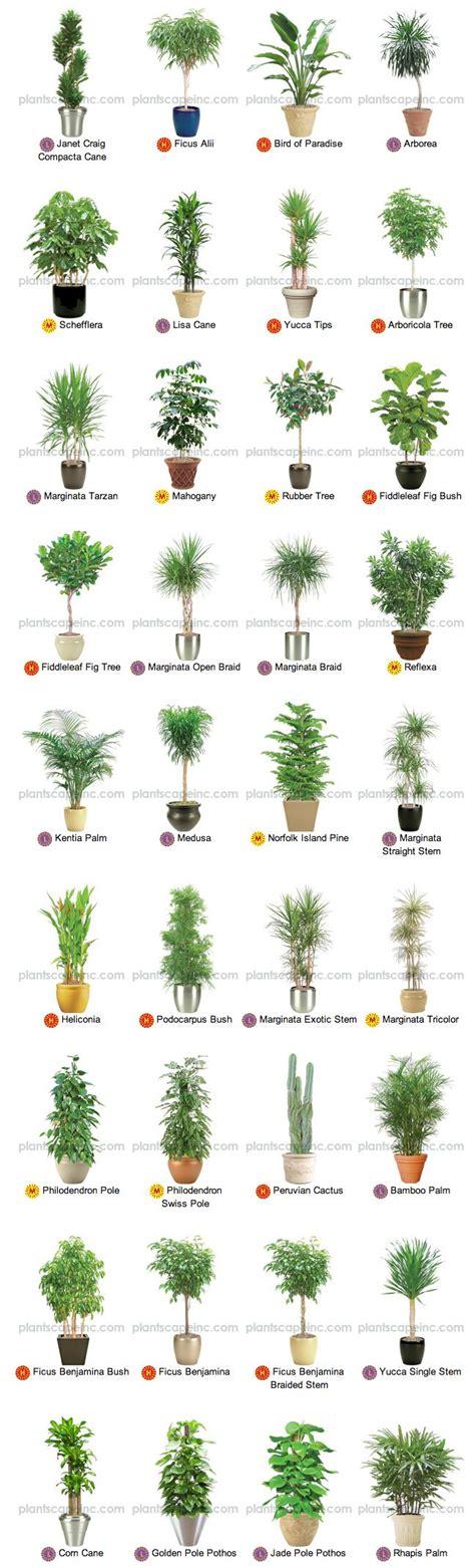 indoor tree plants large indoor plants for interior landscaping by plantscape inc my garden pinterest plants