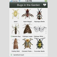 102 Best Images About Lawncare * Lawn Insectsturf Pest On