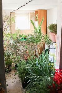 Hortensien überwintern Im Keller : der erste frost und einr umen 2015 majas pflanzenblog ~ Lizthompson.info Haus und Dekorationen