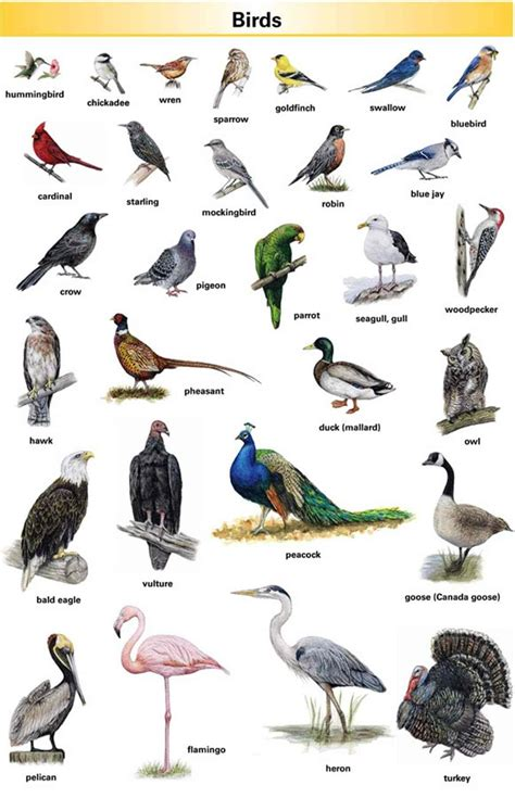 Learn English Vocabulary through Pictures: 100+ Animal