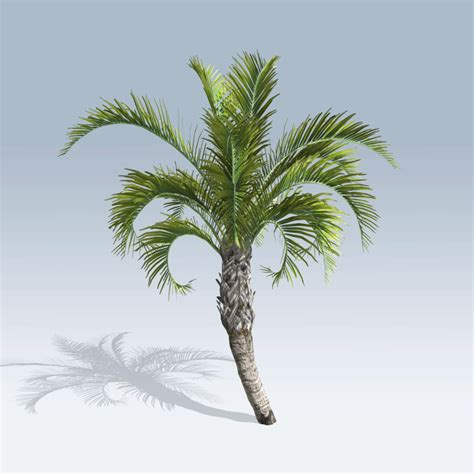curly palm  speedtree