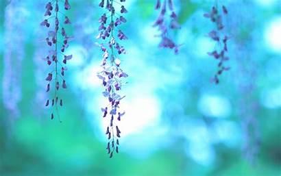 Purple Flowers Wallpapers Nature Teal Royal Flower