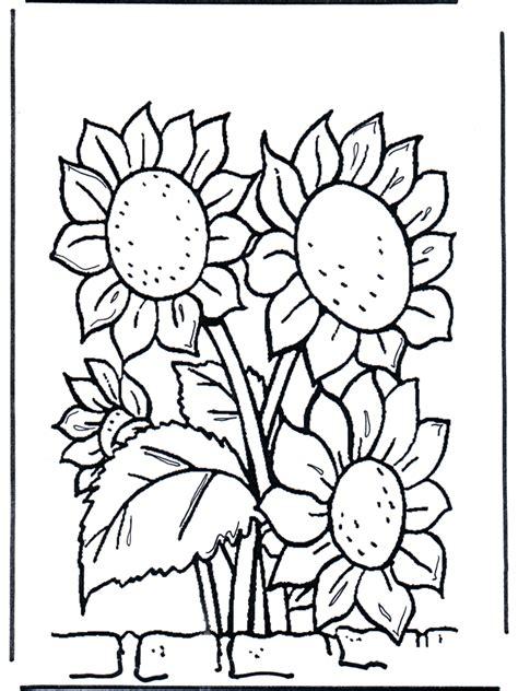 girassois flores