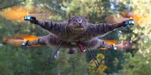 cat quadcopter bart jansen wants to build a jet propelled badger
