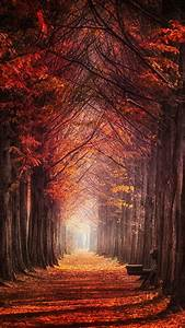 Red, And, Orange, Autumn, Trees, Leaves, On, Path, In, The, Forest