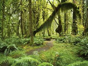 The Most Beautiful Forests To Visit In Washington State