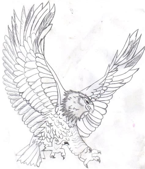 bald eagle template free printable bald eagle coloring pages for kids