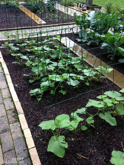 best mulch for veggie garden digging into mulches types of landscape mulch for your garden