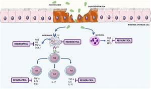Inflammatory Bowel Disease  Ibd  Mechanisms And