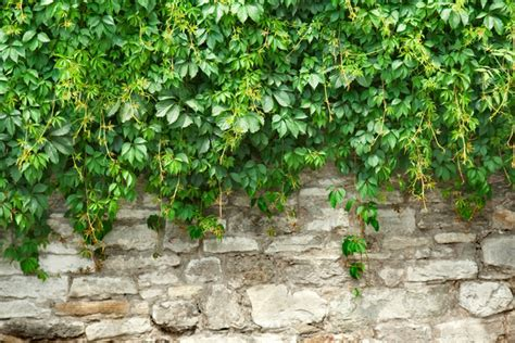 Stone Wall With Plants Custom Wallpaper Mural Print By Jw