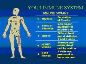 immune system including Immune System/AIDS