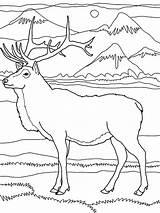 Elk Coloring Pages Mountain Mountains Rocky Drawing Pencil Drawings Printable Deer Colornimbus Lion Getdrawings Getcolorings Popular sketch template