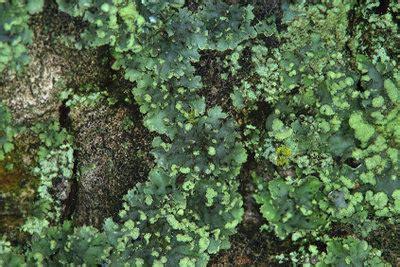 Kupfer Grünspan Entfernen by Gr 252 Nspan Entfernen Stein So Gelingt S