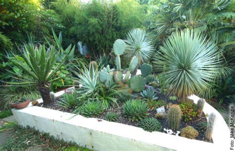 Garten Yucca Kaufen by Agave Winterhart Kaufen Gr 228 Ser Im K 252 Bel 252 Berwintern