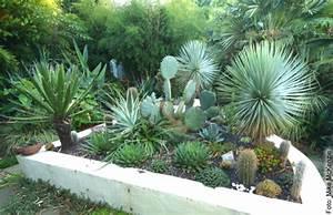 Yucca Palme Winterhart : yuccas co winterhart ~ Frokenaadalensverden.com Haus und Dekorationen