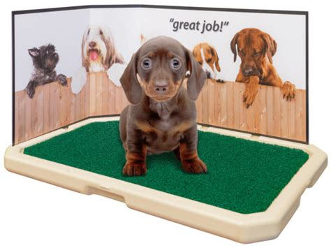 house training cleanup pet loo pee pads