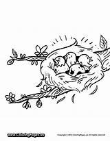 Nest Coloring Bird Passarinho Ninho Desenho Filhotes Colorir Olds Birds Imprimir Printable Tudodesenhos Popular Easy Coloringhome sketch template