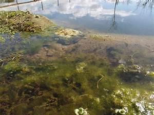 Algen Im Teich Entfernen : algen im teich nachhaltig bek mpfen und entfernen ~ Orissabook.com Haus und Dekorationen