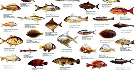 fish names  pictures saltwater fish pictures