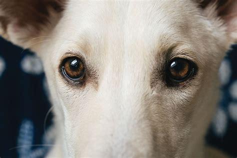 """""""white Dogs,"""" By Milovan Radojević"""