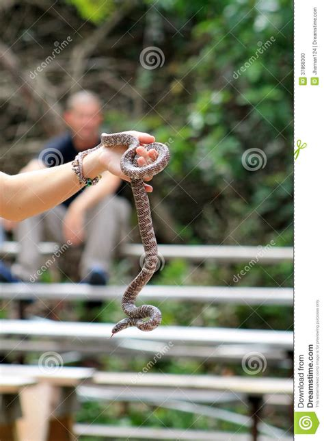 snake hanging  girls hand stock photo image