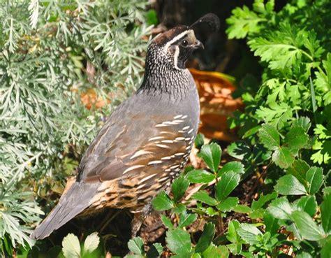 birds of the southern oregon coast
