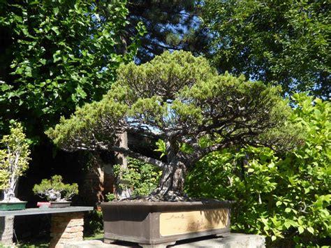 Botanischer Garten Wien Bonsai by Botanische Spaziergaenge At Thema Anzeigen 31 07 2015