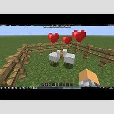 Minecraft Wie Kann Man Hühner Füttern Youtube