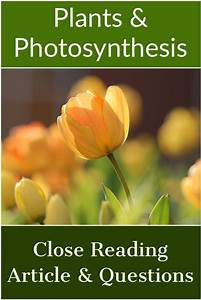 Close Reading Article   U0026quot Plants And Photosynthesis