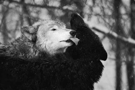Wolf In My Mind