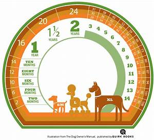how to calculate a dogs age in dog years