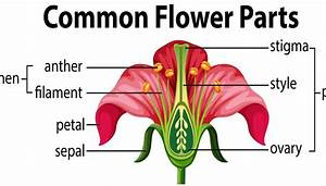 Diagram Of The Parts Of A Flower