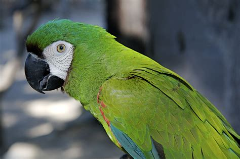 loros todo acerca de la mejor ave de compania aves exoticas