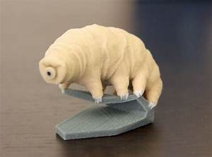 Follow up: Here's a 3D printed Tardigrade (Water Bear) by ...