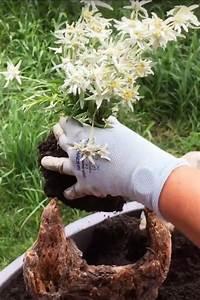 Steinbeet Pflanzen Winterhart : wie gestalte ich einen alpinen steingarten im gef ss oder ~ Watch28wear.com Haus und Dekorationen