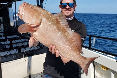 grouper florida feet fishing hubbard central west depths ranging continues marina boats action sportsman