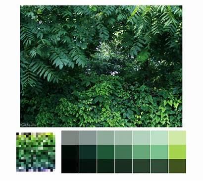 Nature Palettes Palette Natural Forest Amazing Colour
