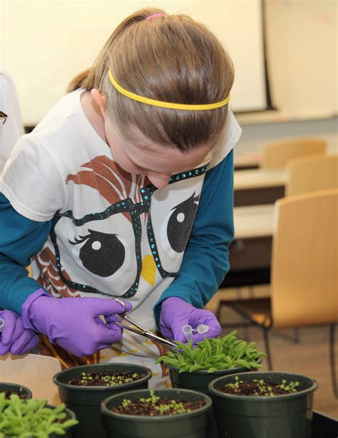 growing curiosity  plants  engage students