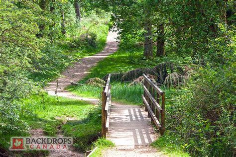 forest bridge backdrops canada