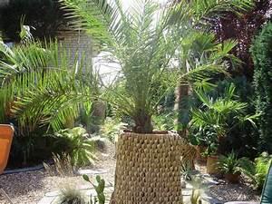 Palmen Für Draußen : palmen und co ph nix canariensis donnerstag 3grad ~ Michelbontemps.com Haus und Dekorationen