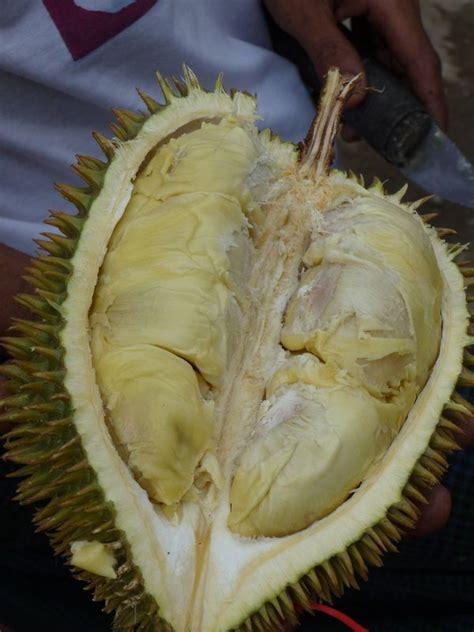 yangon stinkfrucht durian photo