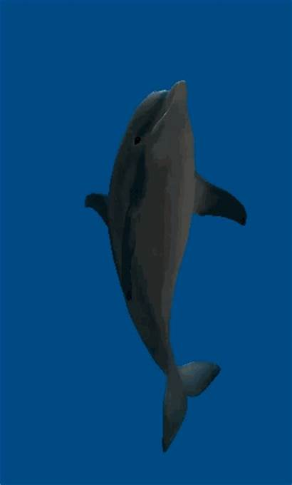 Dolphin Ecco Animation Clipart Gifs Animated Defender