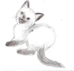 how to draw a realistic cat realistic kitten by catcat49 on deviantart